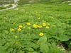 2005_7_31harinoki_104